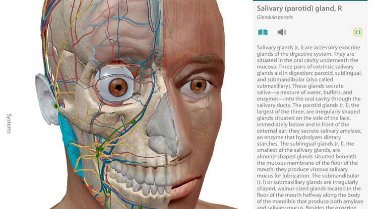 Human Anatomy Atlas 2017 Edition 3d